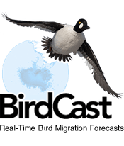 forecast the migration of birds