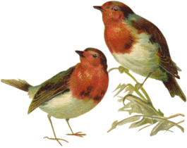 victorian_birds_1_quaddles_by_quaddles