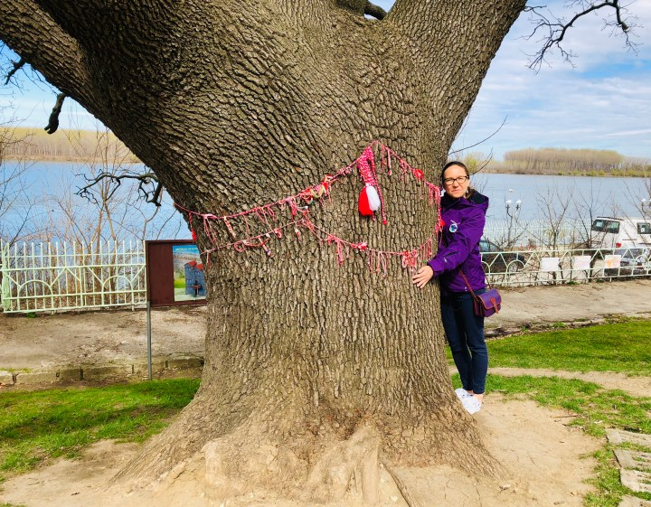 The 100 years old oak tree in Silistra