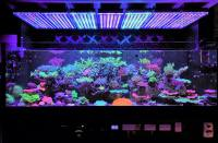 Aquarium LED Lighting Photos best Reef Aquarium LED ...