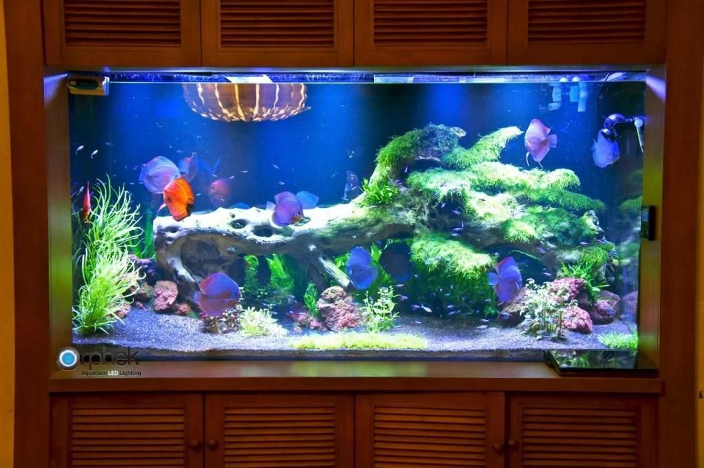 Planted freshwater aquarium lighting Aquarium LED LightingOrphek