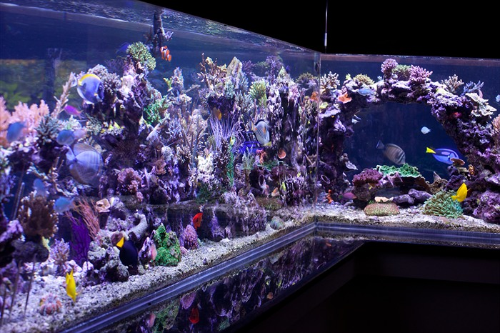 1300 gallon Tank suffered a catastrophic failure Aquarium