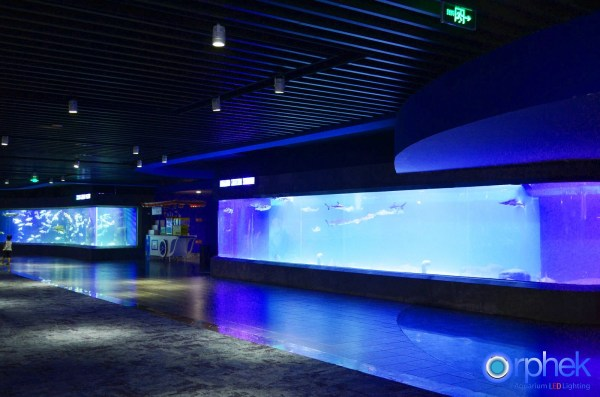 Chengdu Public Aquarium Led Light Project Reef