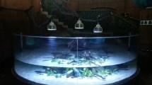 Bahamas Hotel Chooses Orphek Led Lighting Aquarium