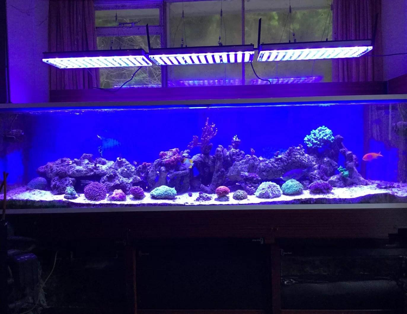 Led Light Aquarium