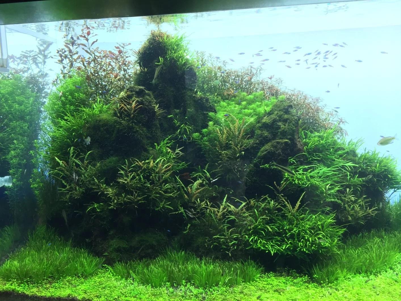 Orphek Reef Tour in Japan  Sumida Aquarium in Tokyo