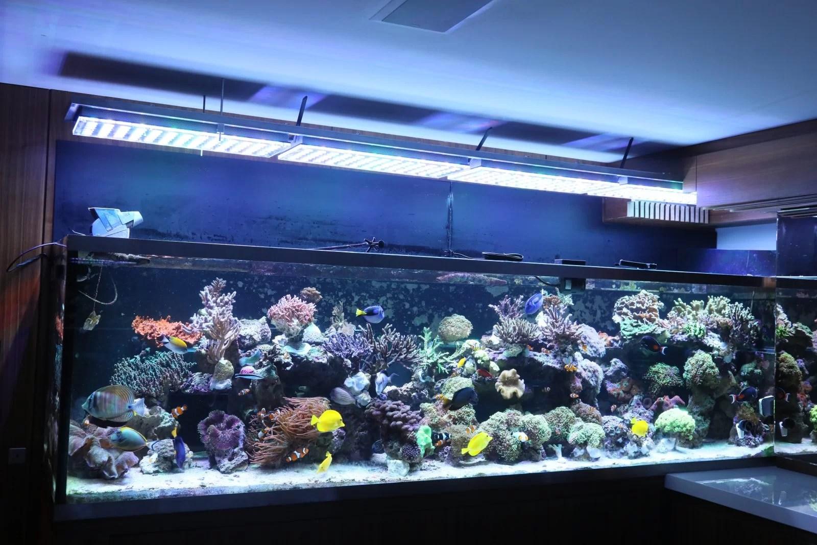 Best Led Reef Lights