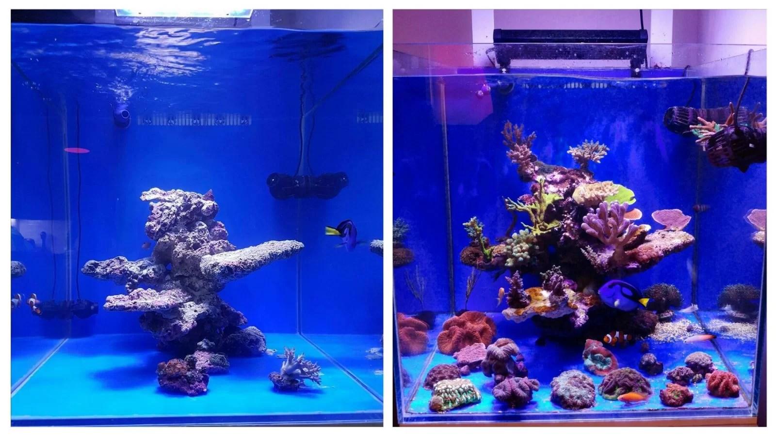 Best Led Aquarium Lighting Corals