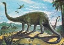 4diplodocus