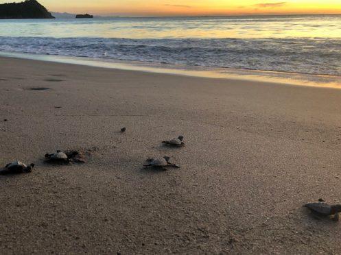 turtles7