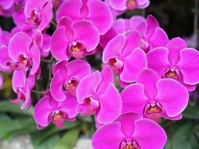 Orquídea tropical
