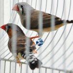 Ο Κύριος, ο σατανάς και τα πουλιά του ηλικιωμένου ιερέα