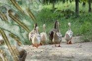 Γρίπη των πτηνών στη Βουλγαρία