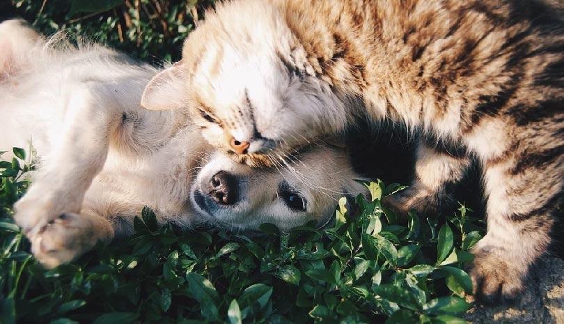 Όσο η φιλία θα αποτελεί μόνο υπηρέτρια των κατώτερων στόχων, τόσο θα κυβερνά στον κόσμο το κακό