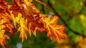 Ο καιρός για σήμερα30 Σεπτεμβρίουκαι αύριο 1 Οκτωβρίου από την ΕΜΥ.