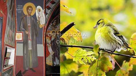 Ο αγιορείτης άγιος που έμεινε στέρεος στην ομολογία και αποκεφαλίστηκε