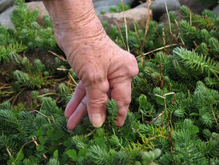 arthritic-hand-touching-plants