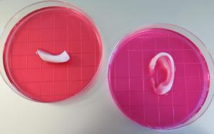 bioprinted-structures