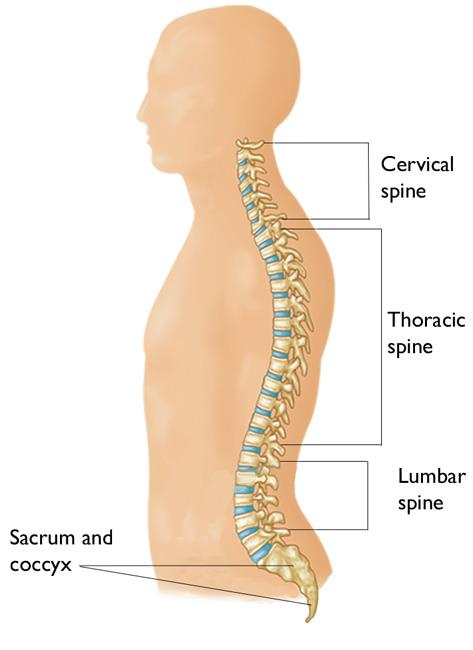 nerves in neck and shoulder diagram wiring sony xplod cervical radiculopathy pinched nerve orthoinfo aaos spine anatomy