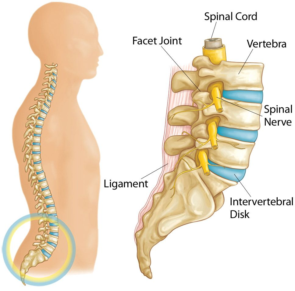 medium resolution of illustration showing parts of the lumbar spine including intervertebral disks