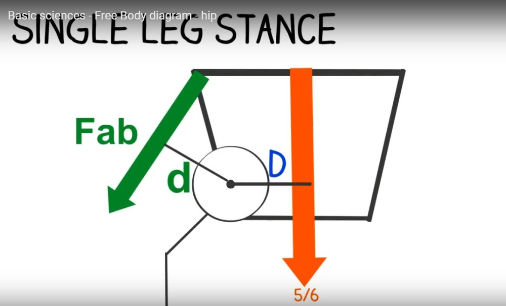 medium resolution of free body diagram hip joint