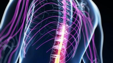 Photo of Impaired Muscle Mitochondrial Biogenesis, Myogenesis Behind Spinal Muscular Atrophy