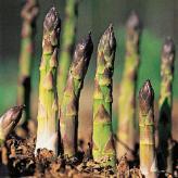 piccoli asparagi