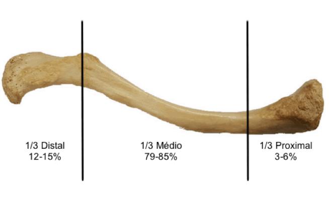 Clavicula anatomia