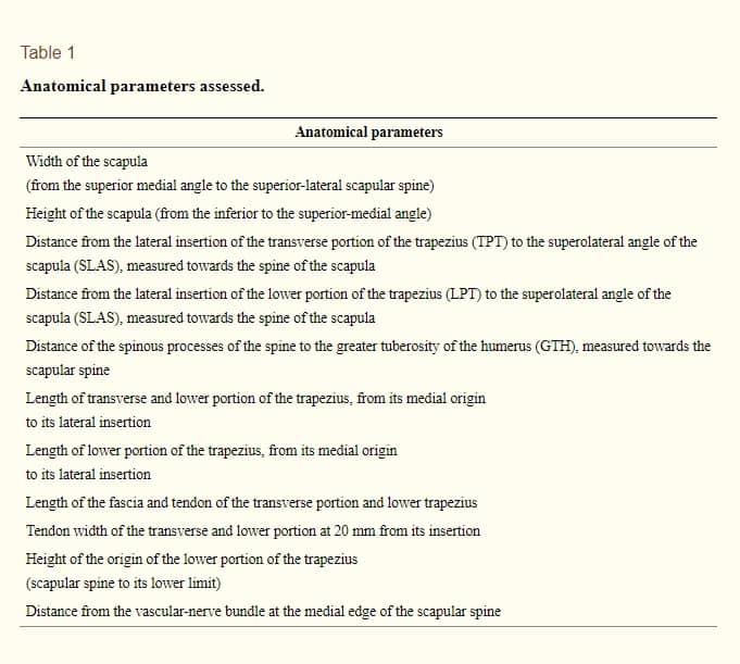 Transferência do Músculo Trapézio para rotação externa do ombro estudo anatômico tabela-1