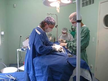 dr-walter-elia-ortopedista-veterinario-2