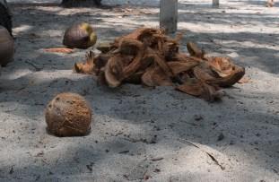 Kokosnüsse ohne Ende