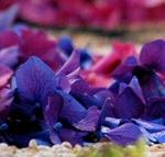 Concorso fotografico Opera dei fiori di Bolsena