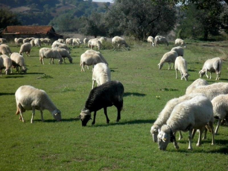 La pecora nera e l'anatra bianca
