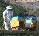 Continuano con successo le attività nel settore apistico del Museo Naturalistico di Lubriano
