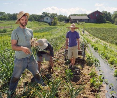 Promozione prodotti filiera corta settore agricolo, il Comune di Giove sostiene il bando Gal