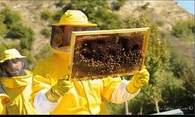 Tutti a lezioni di apicoltura con la Scuola di Apicoltura dell'Etruria propone quattro giorni di attività formative