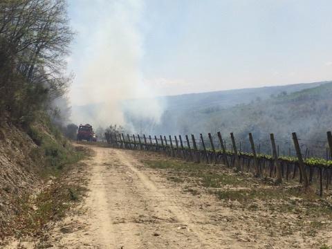 Dodici ettari di terreno divorati dalle fiamme a Ficulle. Fatto arrivare anche un canadair