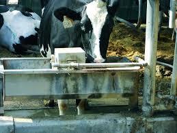 Sviluppo rurale Umbria, sostegno a investimenti per approvvigionamento acqua nei pascoli