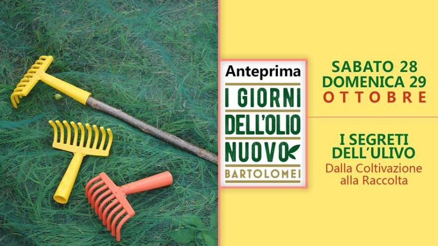 I Giorni dell'Olio nuovo al Vecchio Frantoio Bartolomei di Montecchio, anteprima 28 e 29 ottobre