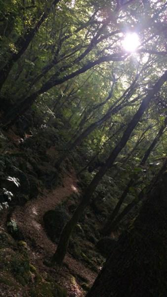 Acquapendente, passato in consiglio il regolamento per la gestione del bosco del Sasseto
