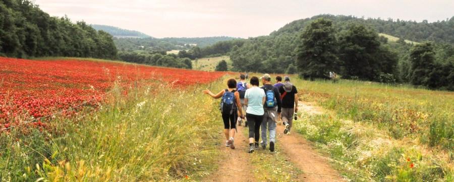 Acquapendente: trekking e natura con l'European Francigena Marathon e la visita al Bosco del Sasseto
