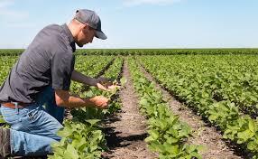 """Agricoltura, la denuncia dell'Agia Cia: """"Contributi Psr in stallo, così si illudono i giovani"""""""