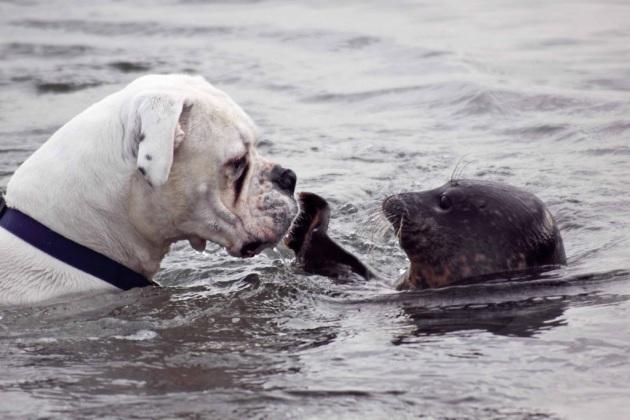 Tenero bacio tra una foca e un cane