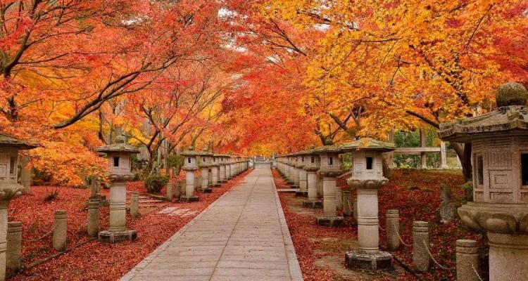 """""""I Colori del Giappone"""". Il coro Vox et Jubilum e le corali giapponesi al Teatro Mancinelli"""
