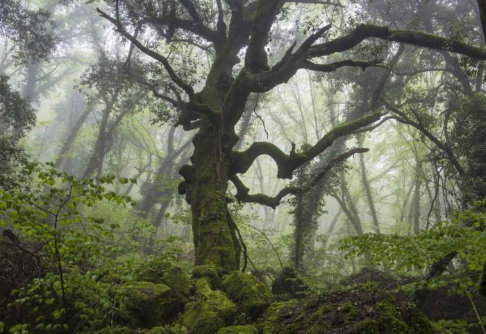 Giornata nazionale degli alberi, visite al Bosco del Sasseto e Museo del Fiore
