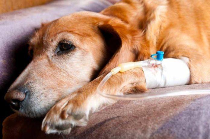 Allarme leptospirosi a Orvieto, un cane muore e scatta il sequestro per un altro esemplare