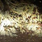 Sopralluogo a Canale vecchio, saranno rimosse 30 piante
