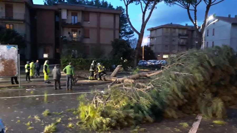 Maltempo sull'Orvietano, alberi abbatuti e strade allagate