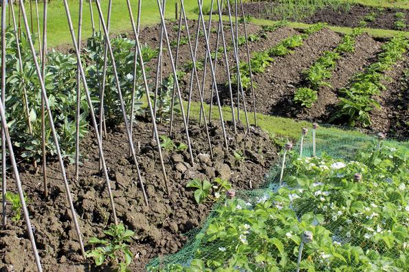 """Slow Food Umbria: """"Rendere fruibili ai titolari degli orti cura e raccolta produzioni alimentari"""""""