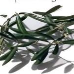 Montecchio, un ramo di ulivo su ogni tomba per ricordare la Pasqua